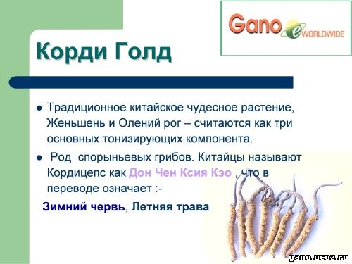 Gano eWorldwide cordy gold кордицепс, натуральный антибиотик, восстанавливает здоровье